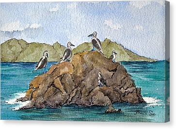 Blue Footed Boobies In Galapagos Canvas Print by Bonnie Sue Schwartz