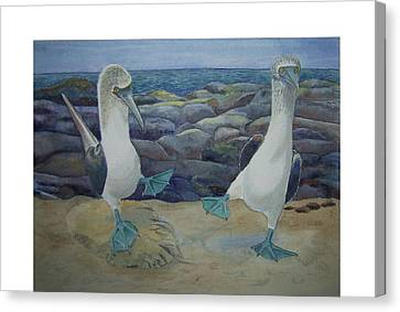 Blue Footed Booby's Mating Dance Canvas Print by Carmen Durden