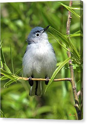 Canvas Print featuring the photograph Blue-gray Gnatcatcher Dsb147 by Gerry Gantt