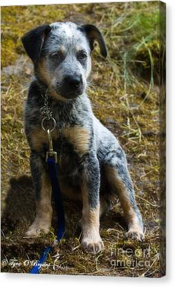 Blue Heeler Pup Canvas Print by Tyra  OBryant