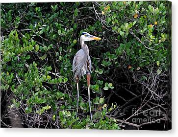 Canvas Print featuring the photograph Blue Heron In Tree by Dan Friend