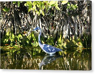 Canvas Print featuring the photograph Blue Heron by Jeanne Andrews