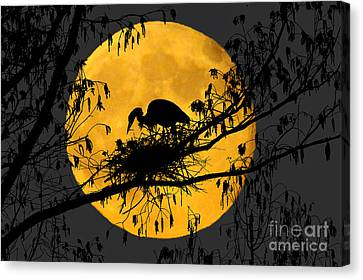 Canvas Print featuring the photograph Blue Heron On Roost by Dan Friend