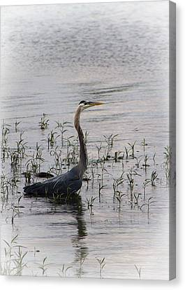 Blue Heron Wading In The Tennessee River Canvas Print