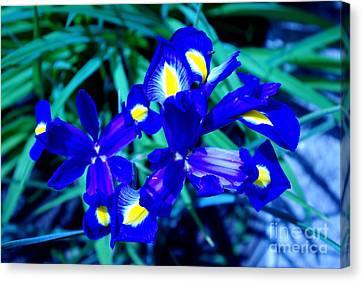 Canvas Print featuring the photograph Blue Iris by AmaS Art