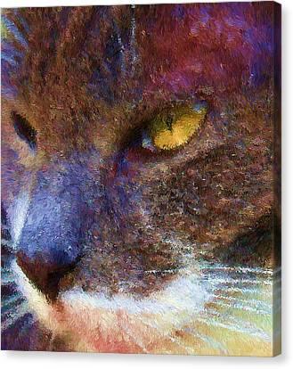 Blue Kitty Canvas Print by Rachel Hames