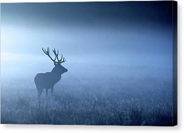 Red Deer Canvas Print - Blue Mist by MarkBridger