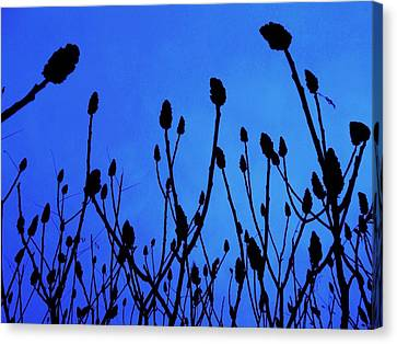 Blue Morning Canvas Print by Todd Sherlock