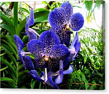 Blue Orchid Canvas Print by Luis and Paula Lopez