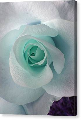 Blue Rose Canvas Print by Robin Hewitt