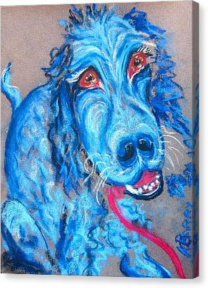 Blue Setter Canvas Print by Kathryn Barry