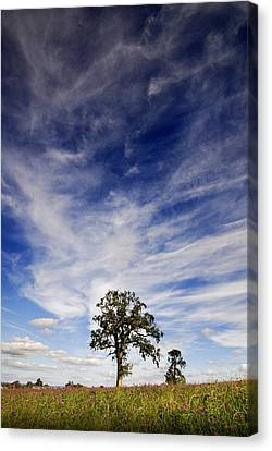 Canvas Print featuring the photograph Blue Skies Smiling At Me  by John Chivers