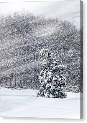 Blue Spruce Canvas Print by Robin-Lee Vieira
