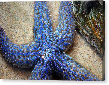 Blue Starfish Canvas Print