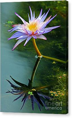 Canvas Print featuring the photograph Blue Stargazer Lily by Larry Nieland