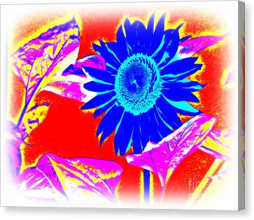 Blue Sunflower Canvas Print by Pauli Hyvonen