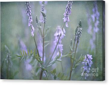 Blue Vervain Canvas Print by Priska Wettstein