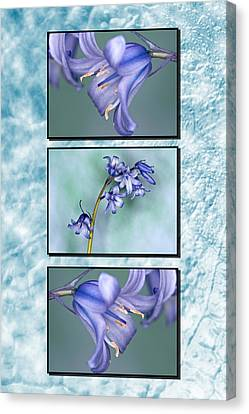 Canvas Print featuring the photograph Bluebell Triptych by Steve Purnell