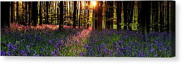 Canvas Print featuring the photograph Bluebells In Morning Sun  by John Chivers