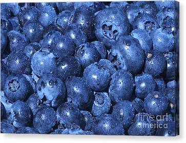 Blueberries With Waterdrops Canvas Print by Sharon Talson