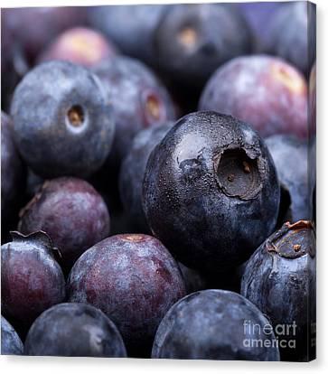 Blueberry Background Canvas Print by Jane Rix