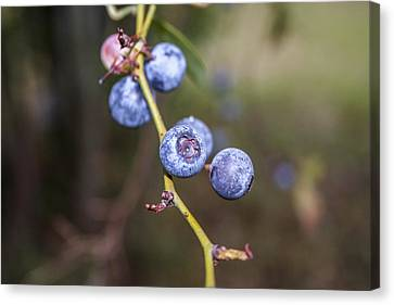 Canvas Print featuring the photograph Blueberry by Ester  Rogers