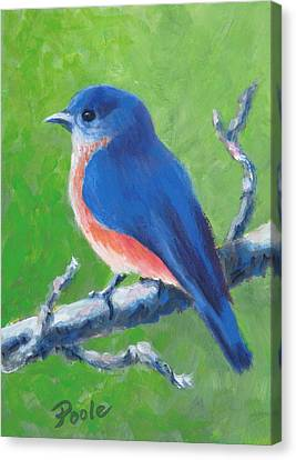 Bluebird In Spring Canvas Print