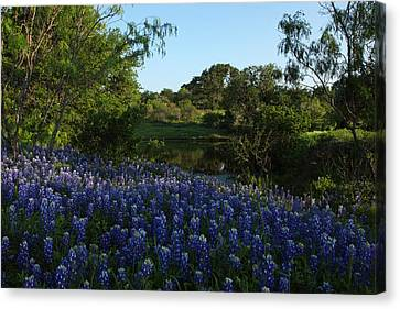 Canvas Print featuring the photograph Bluebonnets At The Pond by Susan Rovira