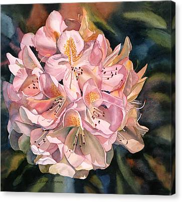 Blushing Pink Rhododendron  Canvas Print by Sharon Freeman