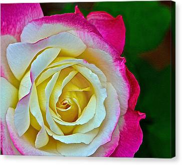 Blushing Rose Canvas Print by Bill Owen