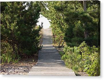 Boardwalk Footpath To The Beach. Canvas Print by Schedivy Pictures Inc.