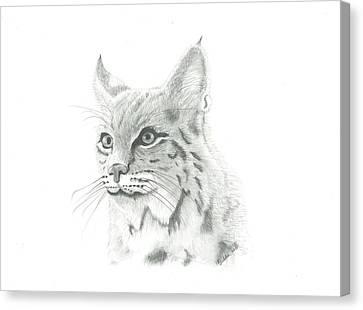 Bob Cat 1 Canvas Print by EJ John Baldwin