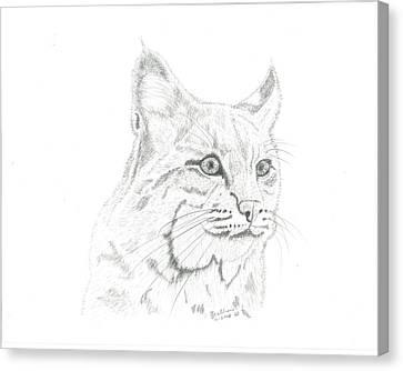 Bob Cat 2 Canvas Print by EJ John Baldwin