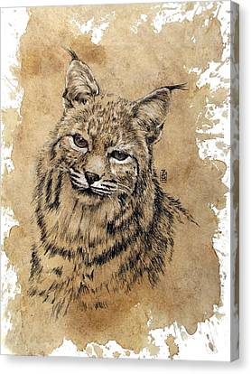 Bobcat Canvas Print by Debra Jones