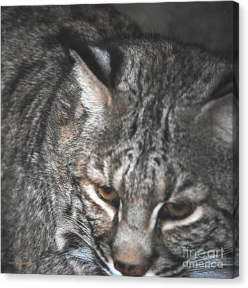 Bobcat Love Canvas Print by DiDi Higginbotham