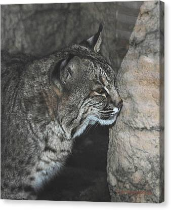 Bobcat Love II Canvas Print by DiDi Higginbotham