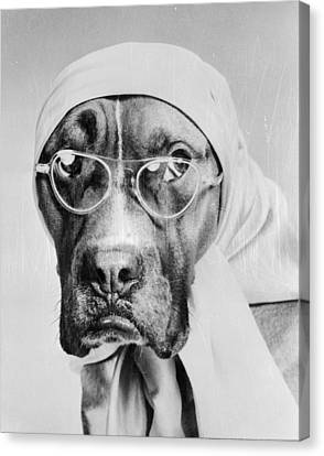 Bohemian Boxer Canvas Print by Keystone Features
