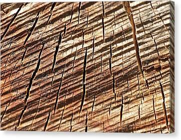 Bois Coupé (fr) - Cut Wood (en/us) Canvas Print