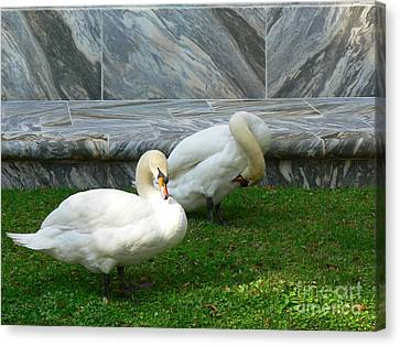 Bok Tower Swans Canvas Print