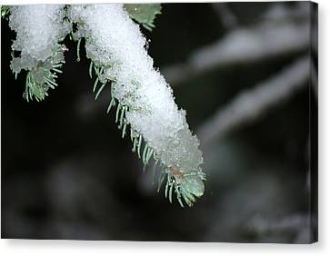 Bokeh Of Evergreen In Snow Canvas Print