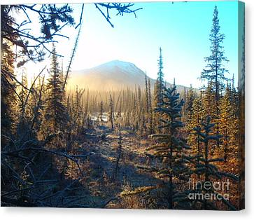 Boreal Forest Sunrise Canvas Print