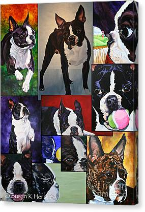 Boston Terrier Animals Acrylic Dog Portraits Pet Portraits Animal Portraits Canvas Print - Boston Acrylic Collage by Susan Herber