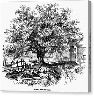 Botany: Penn Treaty Tree Canvas Print by Granger