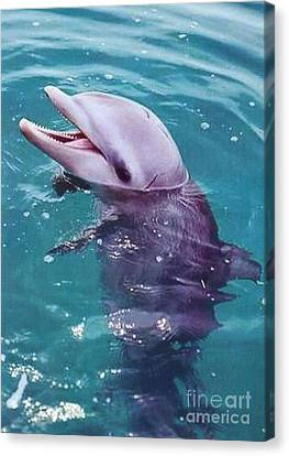 Bottle Nosed Dolphin Canvas Print by Diane Kurtz