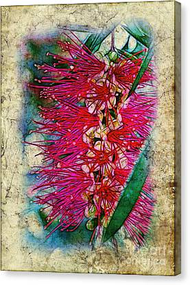 Bottlebrush Canvas Print by Judi Bagwell