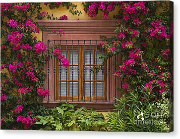 Canvas Print featuring the photograph Bougainvillea Window by Craig Lovell