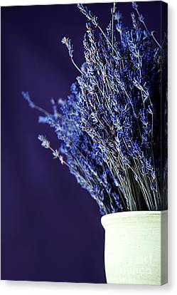 Bouquet Of Lavender Canvas Print by HD Connelly