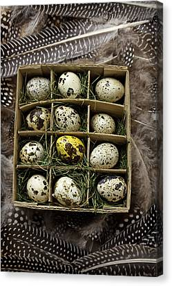 Box Of Quail Eggs Canvas Print by Garry Gay