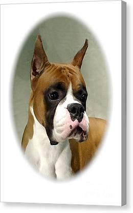 Boxer 1015 Canvas Print by Larry Matthews