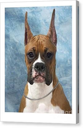 Boxer 155 Canvas Print by Larry Matthews